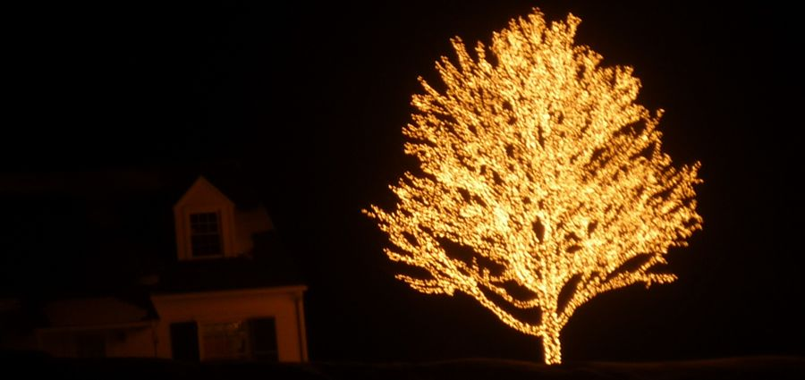 Lighted Tree, south of Cooperstown NY